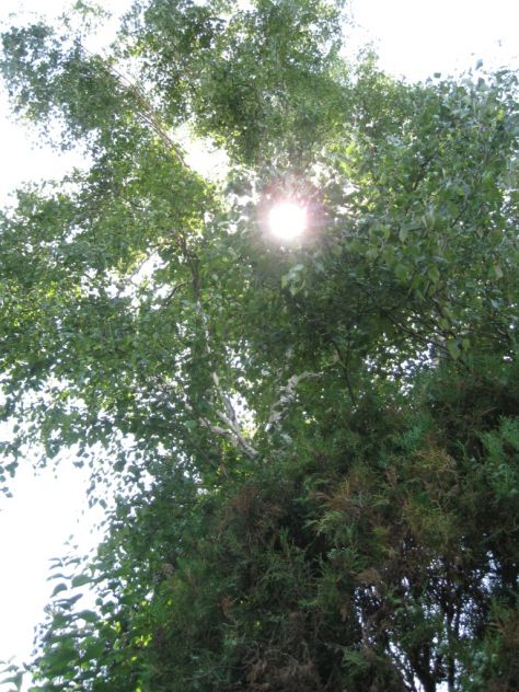 sunce u brezi