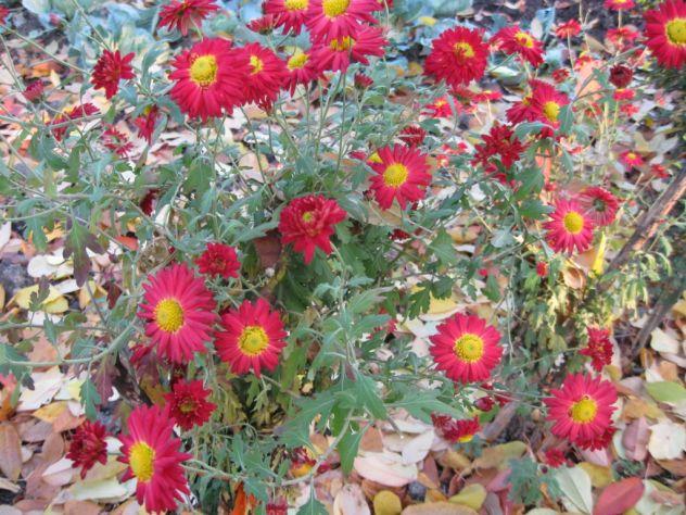 tople jesenje boje