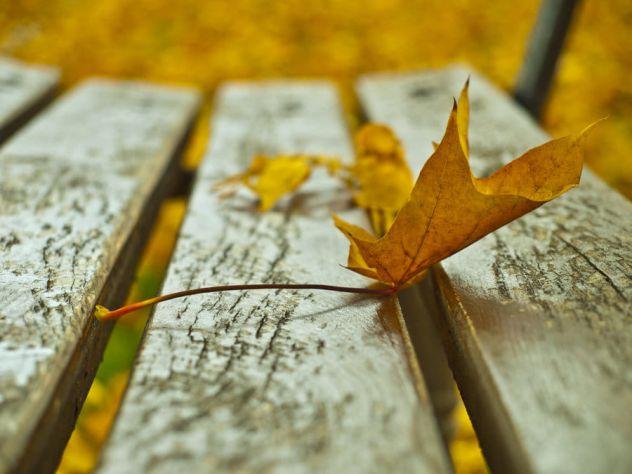 Izblijedit će tvoj fantastični svijet i nestat će, uvenut će tvoji snovi i rasuti se poput žutog lišća s drveća.