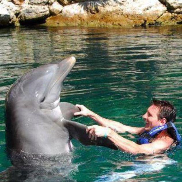 Delfin i Mesi
