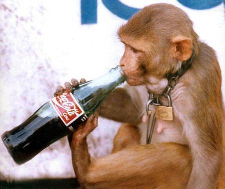 Nema zivog bica koje ne voli Coca Col-u :D