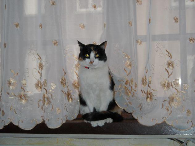 moja maca